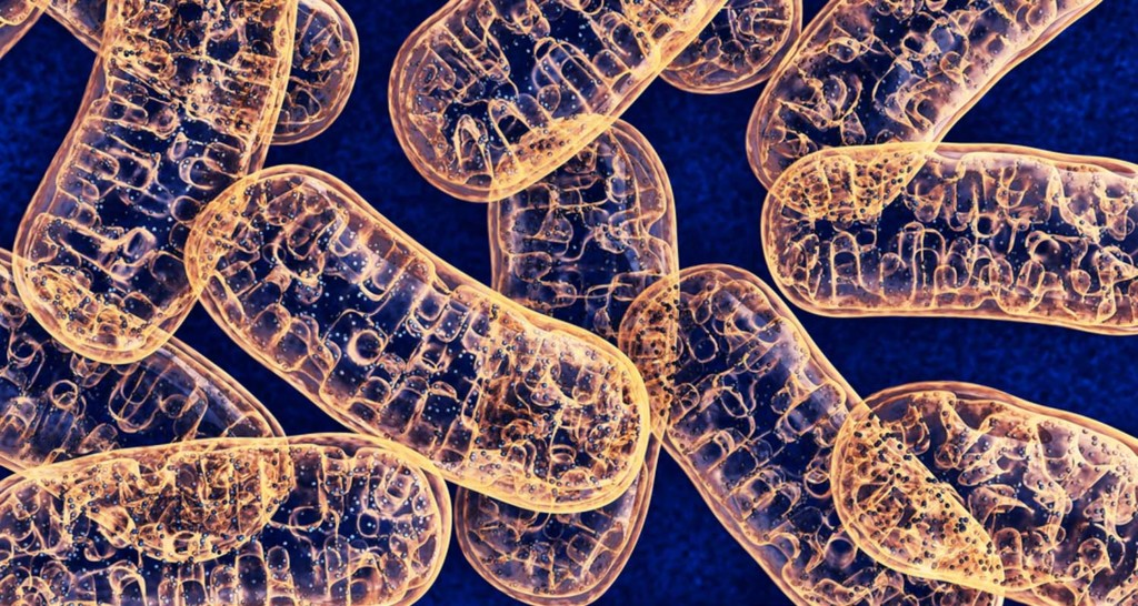 What Are Mitochondria And Why Should You Care_What are mitochondria
