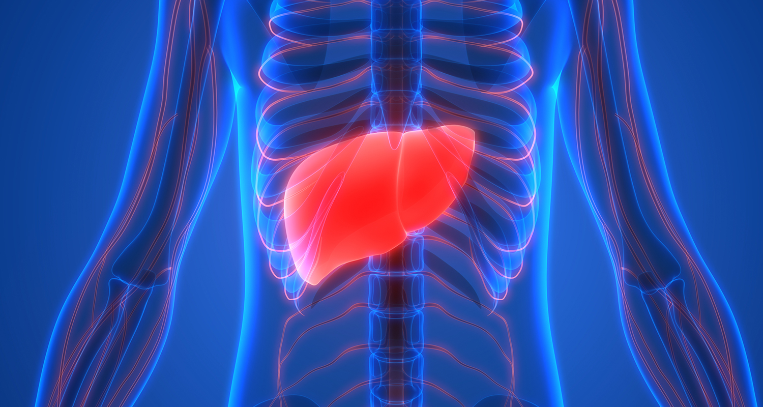 Liver isolated in body illustration